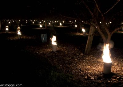 Anti-frost candles that burn at night to protect flowering trees