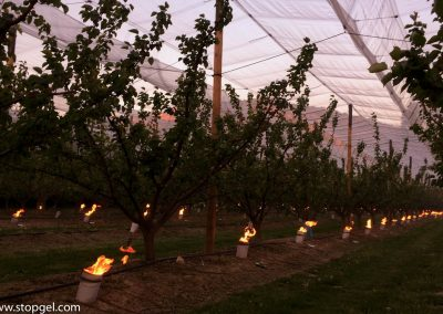 Stopgel Green candles in an apricot orchard under anti-hail nets