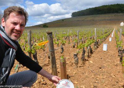 Les viticulteurs choisissent les bougies STOPGEL VERTE pour protéger leur vignoble