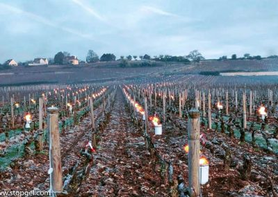 Protection of the vines with STOPGEL GREEN during hoar frost