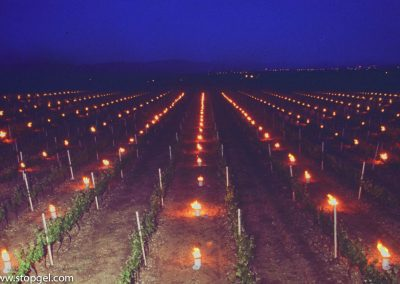 A vineyard protected from spring frosts with STOPGEL candles